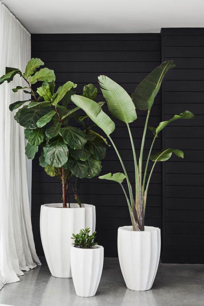 Big plant 1
