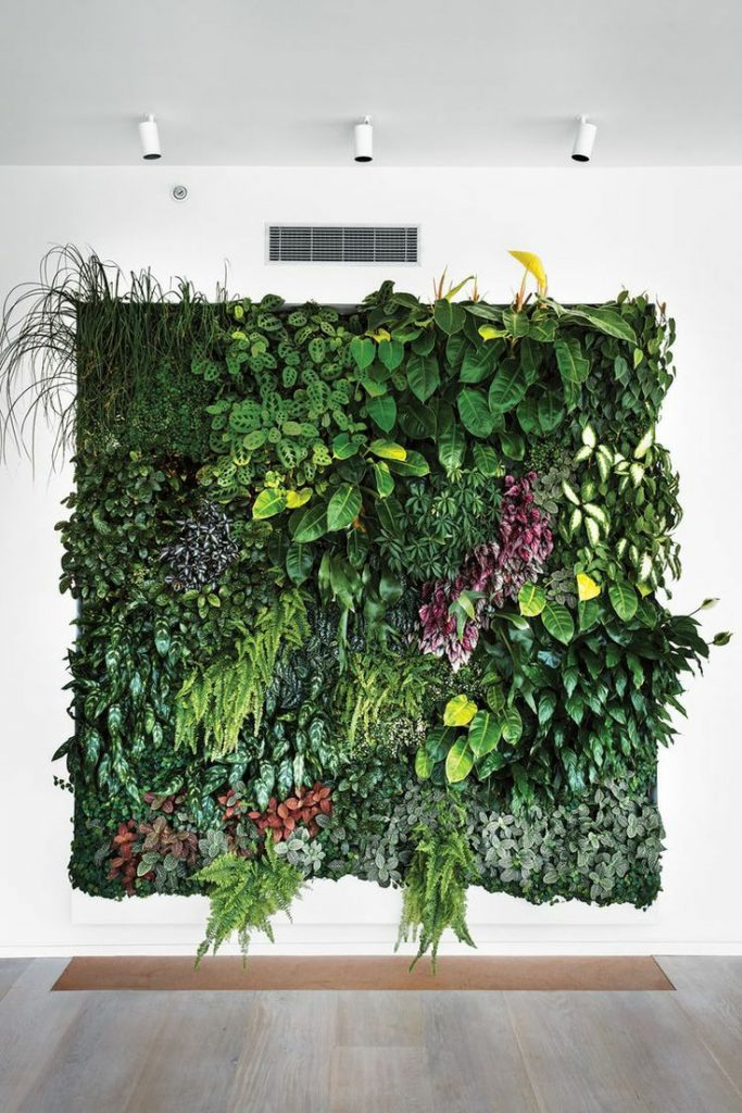 Picture 12 Living Wall with various plants