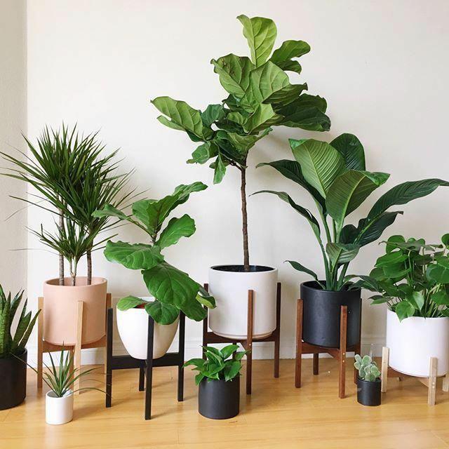 Picture 15 Using Designer Pots