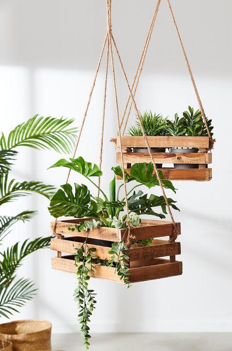 hanging plant 2