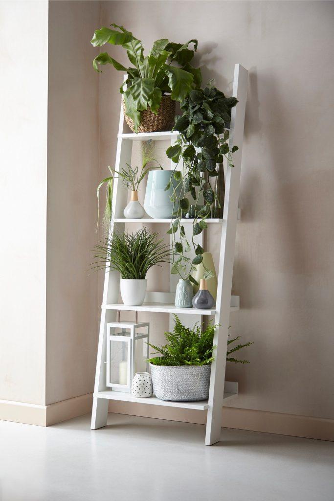 plant holder 1