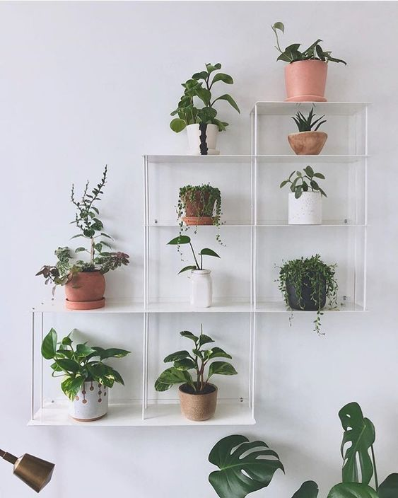 shelf plant 2